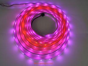 16.4Ft DMX512 Digital Intelligent RGB 5050 LED Light Strips, 12V DC
