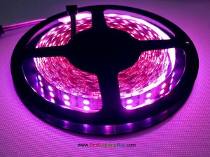Double Row Color Changing 5050 SMD RGB LED Strip, 126 LED/M, 12V DC
